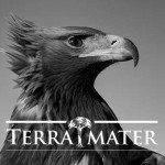 terra-mater-portfolio