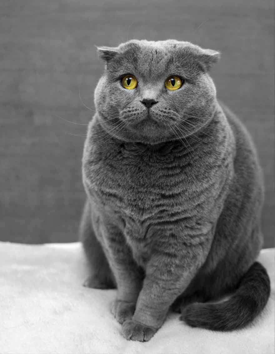 UX Senior Researcher cat